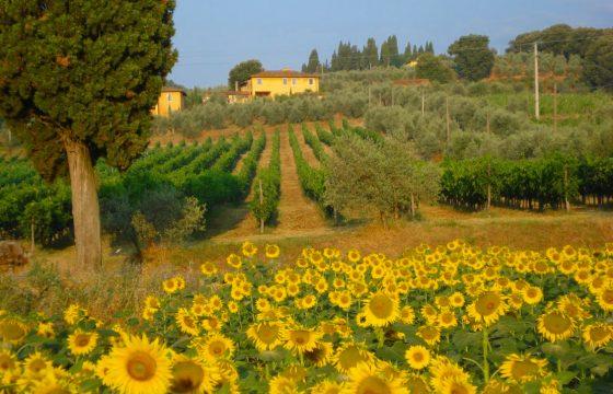 Tenuta di Petrolo – feriebolig v. Chianti, Toscana