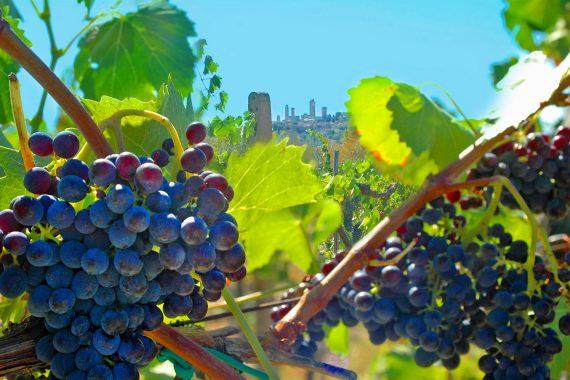 Ferie på vingård