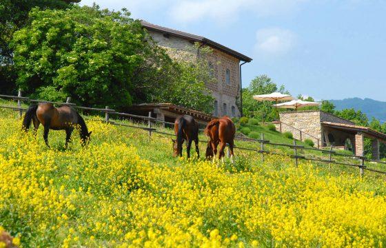 Privat villa med pool og stor have ved stutteri – ferie med eller uden hest